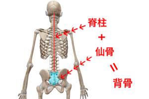 仙骨 脊柱 背骨 navis